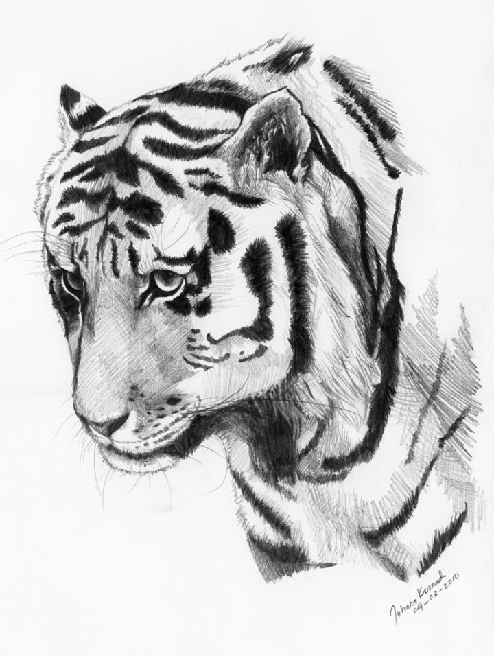 150-57ne4cb-sad-tiger.jpg