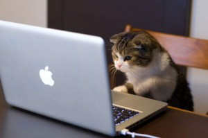 cat-on-laptop