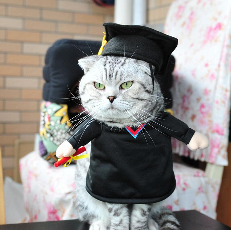 Kucing wisuda