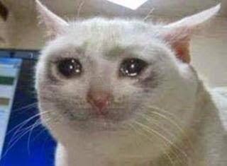 cry cat